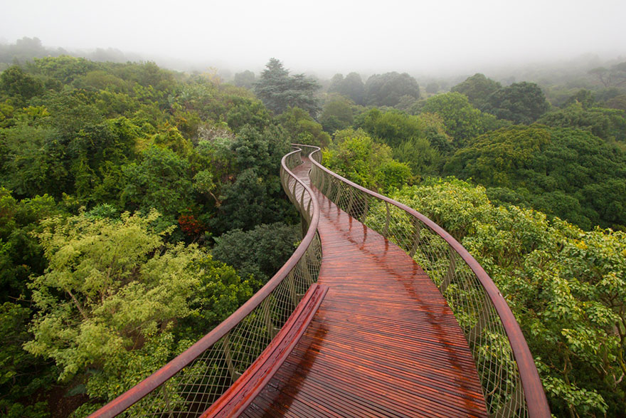 Sud-Africa-AD-Tree-Canopy-Walkway-Path-Kirstenbosch-National-Botanical-Garden-01