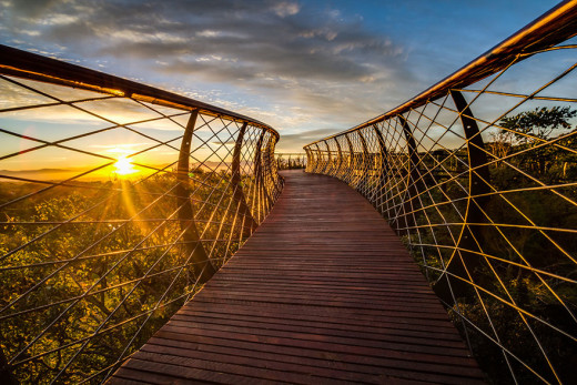 AD-Tree-Canopy-Walkway-Path-Kirstenbosch-National-Botanical-Garden-03