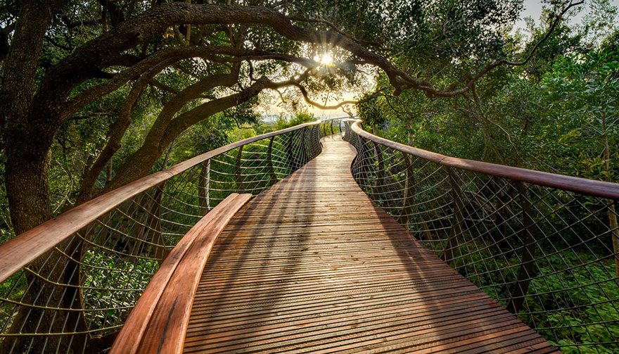 Sud-Africa-AD-Tree-Canopy-Walkway-Path-Kirstenbosch-National-Botanical-Garden-05