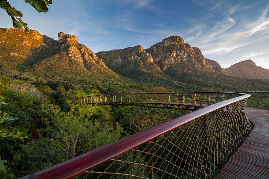 Sud-Africa-AD-Tree-Canopy-Walkway-Path-Kirstenbosch-National-Botanical-Garden-10